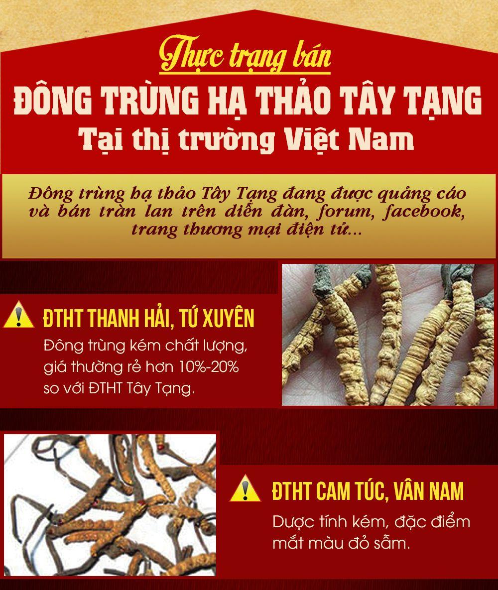 Đông trùng Tây Tạng nguyên con cao cấp
