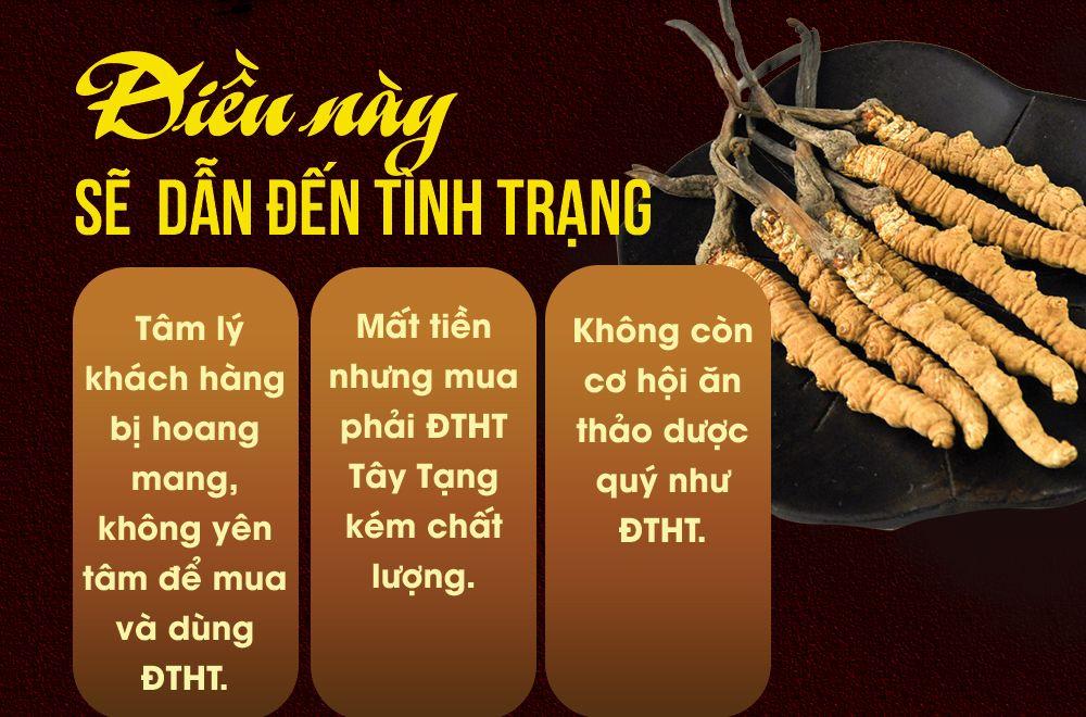 Đông trùng Tây Tạng nguyên con đặc biệt