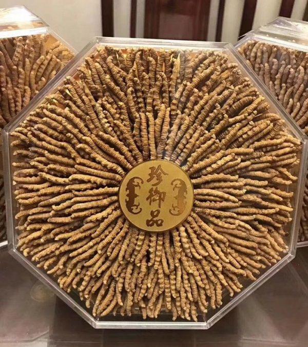 ava dong trung ha thao nguyen con tay tang loai 1500 con 1kg