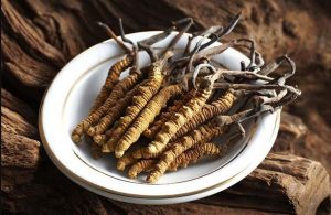 Đông trùng hạ thảo bổ dưỡng thích hợp nhiều đối tượng sử dụng