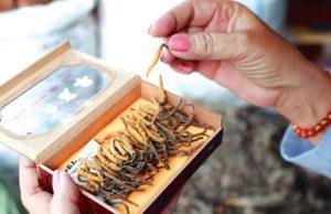Đông Trùng Hạ Thảo có tác dụng phòng ngừa bệnh tật ở người già