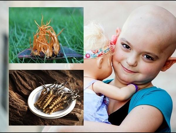 Đông trùng hạ thảo có tác dụng ngăn ngừa tế bào ung thư phát triển