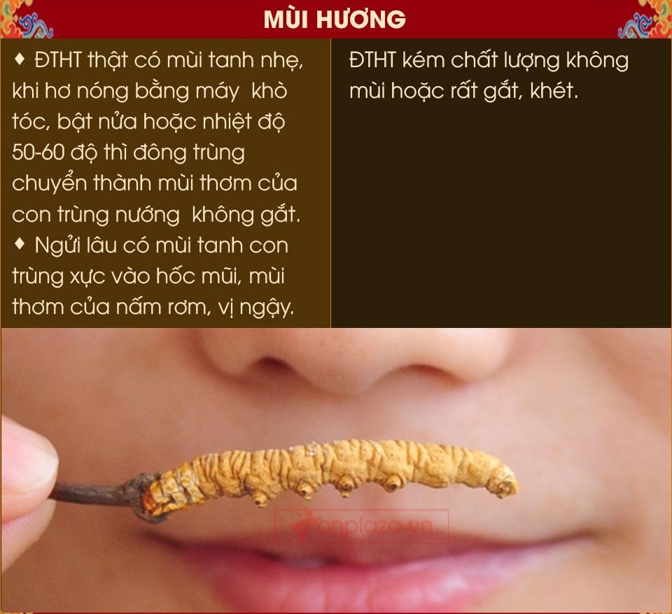 Phân biệt mùi hương con đông trùng tây tạng