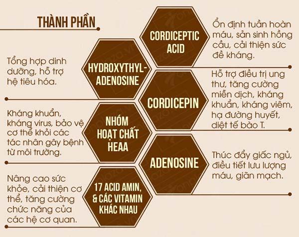 Những thành phần chính có trong đông trùng