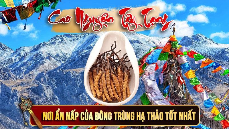 Đông trùng hạ thảo nguyên con Tây Tạng có giá tiền tỷ