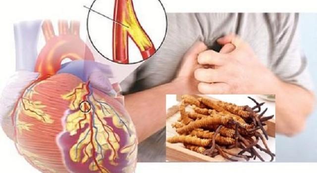 Đông trùng với hệ tim mạch