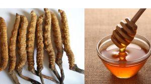Đông trùng hạ thảo ngâm mật ong bổ dưỡng thượng hạng