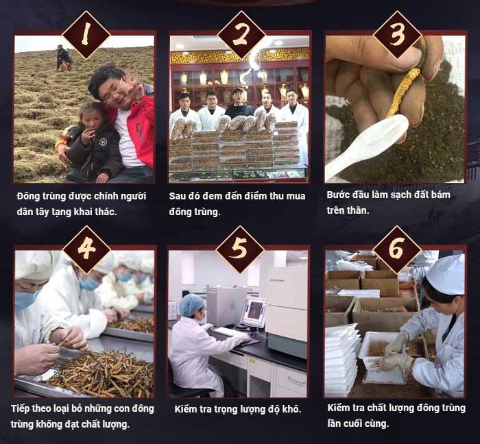 Đông trùng hạ thảo Tây Tạng nguyên con hộp 100gr loại 160 con 6