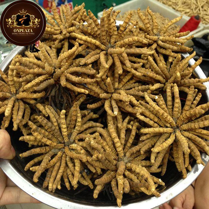 Đông trùng hạ thảo tây tang 6
