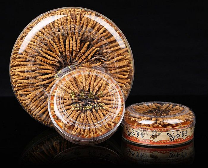 Đông trùng hạ thảo hộp Tây Tạng 100gr loại 300 con 3