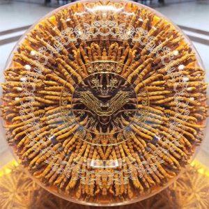 Đông trùng hạ thảo Tây Tạng hộp 100gr loại 500 – 600 con