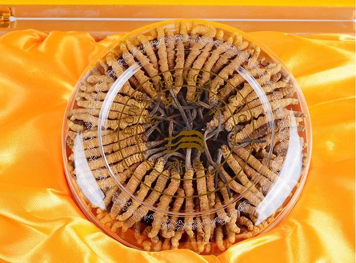 Đông trùng hạ thảo Tây Tạng nguyên con hộp 100gr loại 160 con 4